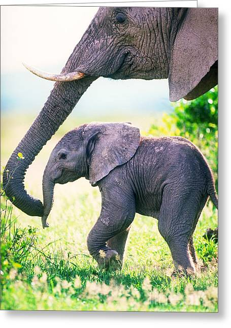 Caring Mother Greeting Cards - African Elephant Mother And Young Greeting Card by Art Wolfe
