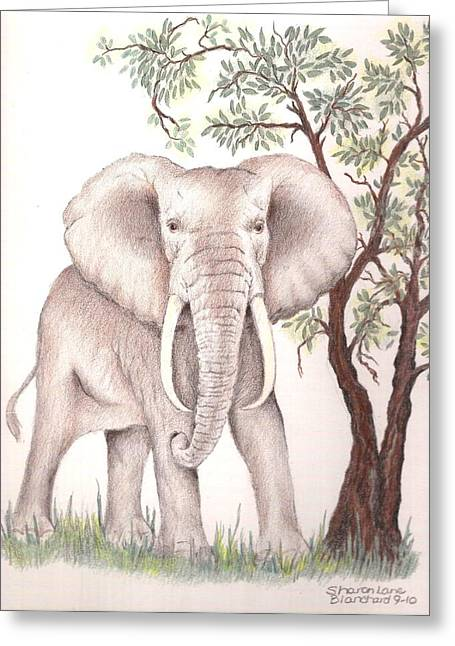 Republican Drawings Greeting Cards - African Elephant Greeting Card by Sharon Blanchard