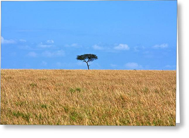 Reserve Greeting Cards - African Grasslands Greeting Card by Aidan Moran