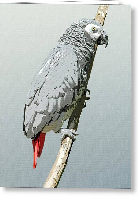 Birdwatching Greeting Cards - African Grey Parrot Greeting Card by Flo Karp