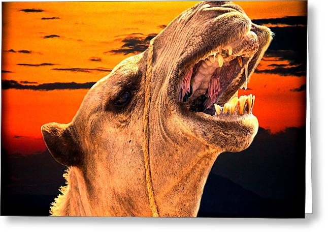 Sahara Sunlight Greeting Cards - African Hump Day Greeting Card by Gary Keesler
