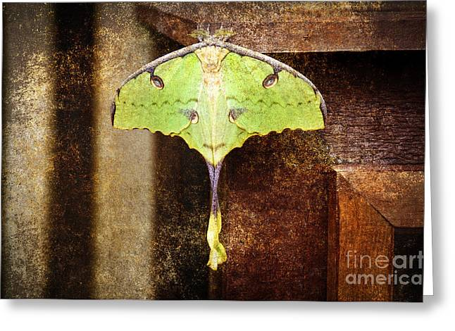 Antenna Mixed Media Greeting Cards - African Moon Moth 2 Greeting Card by Andee Design