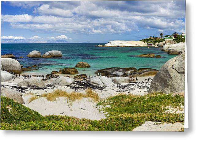 Simons Town Greeting Cards - African Penguins I Greeting Card by Katka Pruskova