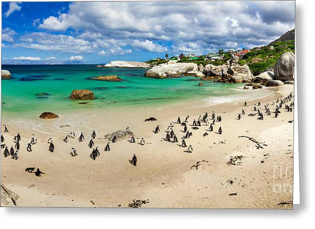 Simons Town Greeting Cards - African Penguins II Greeting Card by Katka Pruskova