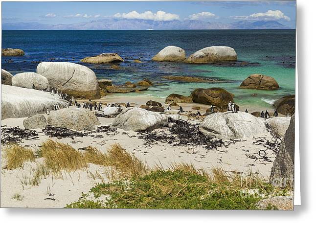 Simons Town Greeting Cards - African Penguins III Greeting Card by Katka Pruskova