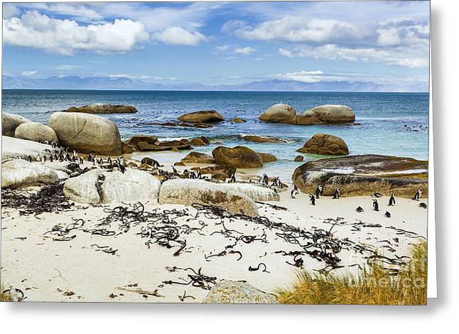 Simons Town Greeting Cards - African Penguins IV Greeting Card by Katka Pruskova