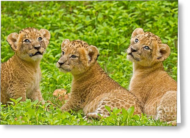 Youthful Greeting Cards - African Princesses Greeting Card by Ashley Vincent
