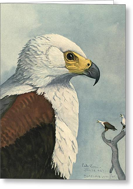Eagle Paintings Greeting Cards - African Sea Eagle  Greeting Card by Louis Agassiz Fuertes