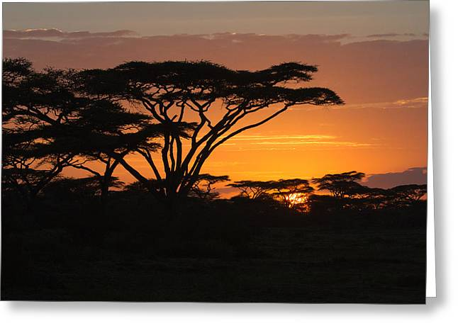 African Sunset Greeting Card by Christa Niederer