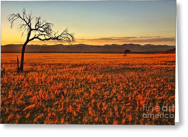 Tree Silhouette At Sunset Greeting Cards - African Sunset Greeting Card by Kate McKenna