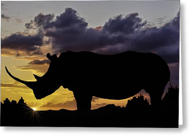 Rhinoceros Greeting Cards - African Sunset Greeting Card by Maria Coulson