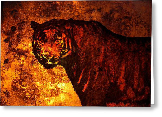 The Tiger Greeting Cards - African tiger  Greeting Card by Toppart Sweden