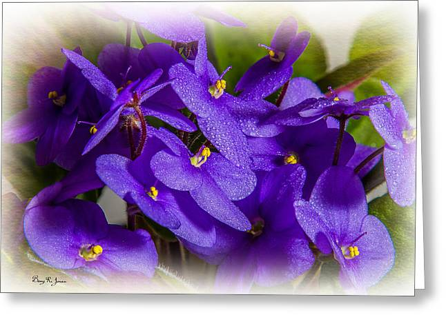 Stamen Digital Greeting Cards - Flowers - Floral - African Violet Greeting Card by Barry Jones