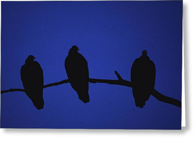 Vulture Silhouettes Greeting Cards - African Vultures in early nightfall. Greeting Card by Joe  Connors