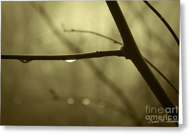 After It Rained Greeting Card by David Gordon