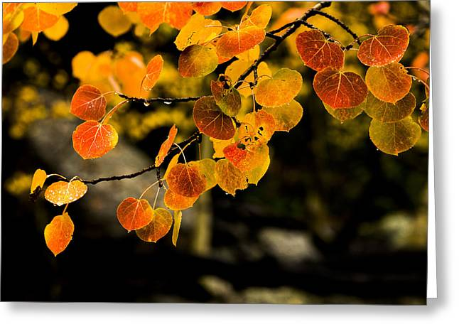 Fall Trees Greeting Cards - After Rain Greeting Card by Chad Dutson