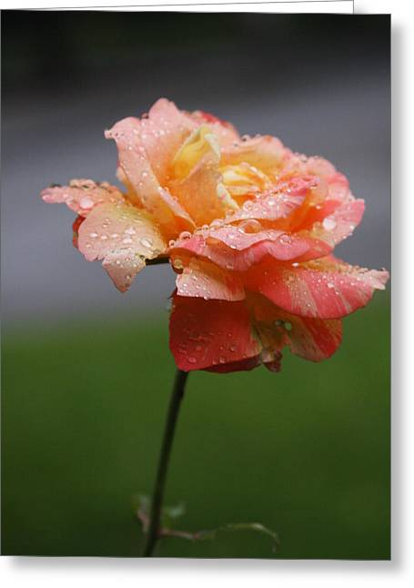 Original Photographs Greeting Cards - After Rain Greeting Card by Vadim Levin