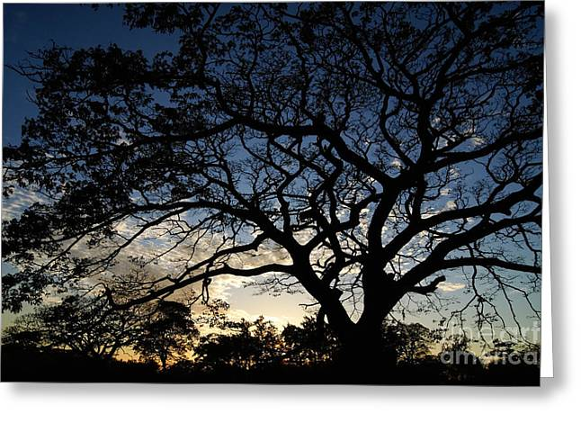 Rincon Greeting Cards - After Sunset Greeting Card by Rudi Prott