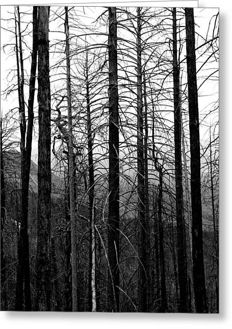 Catalina Mountains Greeting Cards - After the Fire Greeting Card by Joe Kozlowski