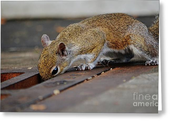 Sciurus Carolinensis Greeting Cards - After the Green Market Greeting Card by Lynda Dawson-Youngclaus