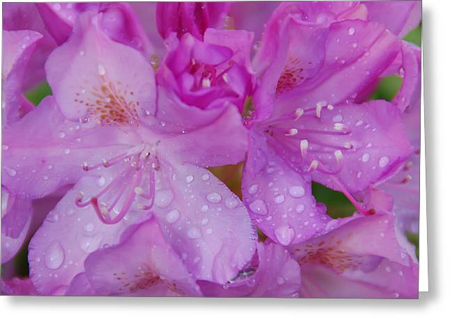 After The Rain Greeting Card by Aimee L Maher Photography and Art Visit ALMGallerydotcom