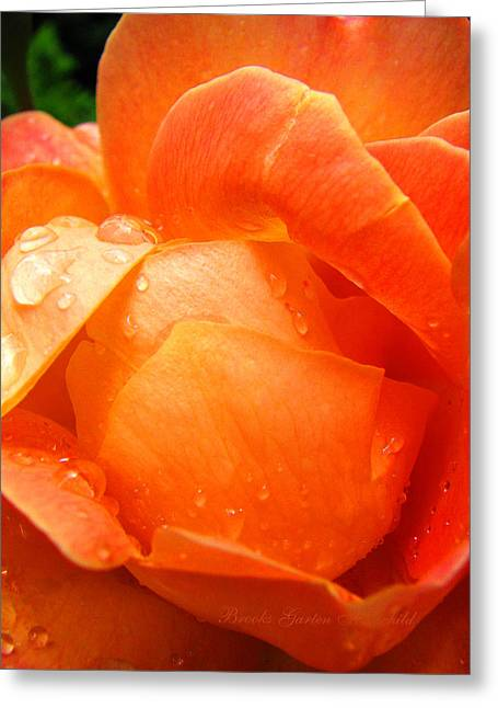 Petals With Droplets Greeting Cards - After the Rain Greeting Card by Brooks Garten Hauschild