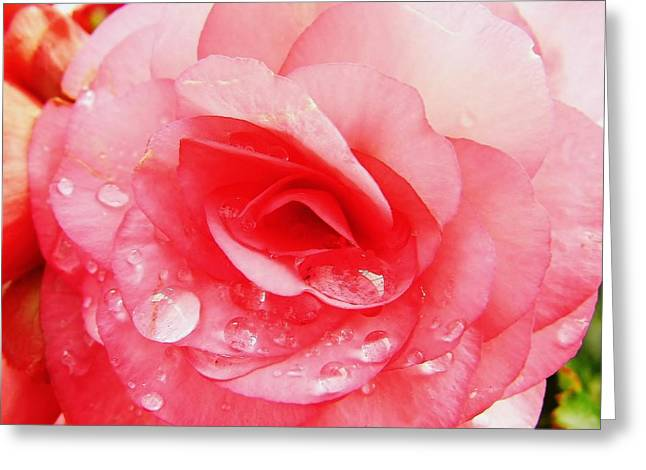 Moisture On Plants Photographs Greeting Cards - Rose After The Rain Greeting Card by D Hackett