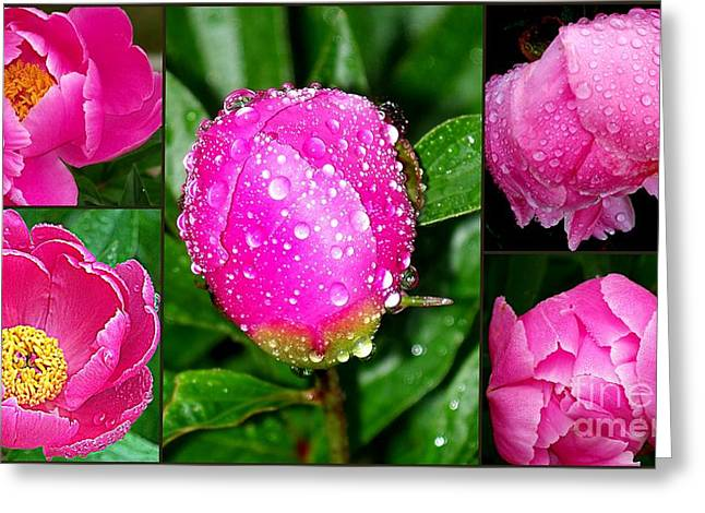 Eunice Miller Greeting Cards - After The Rain Greeting Card by Eunice Miller