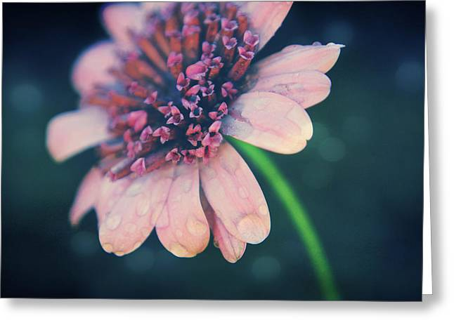 Texture Flower Greeting Cards - After the Rain  Greeting Card by Laurie Search