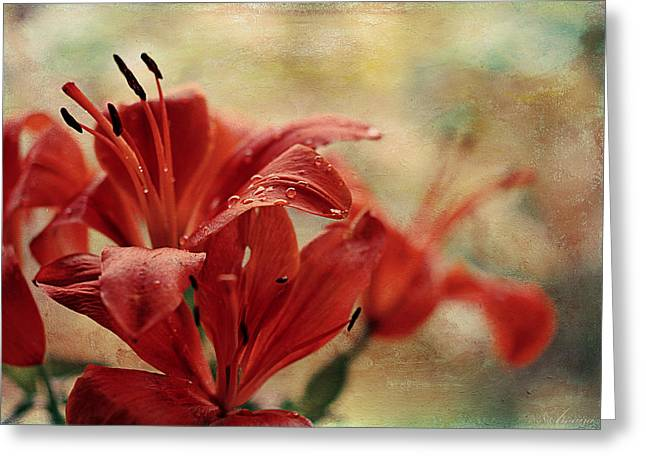 Day Lilly Digital Greeting Cards - After The Rain Greeting Card by Maria Angelica Maira