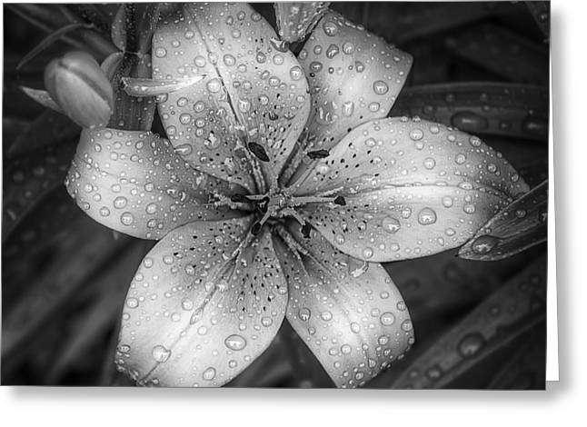 After the Rain Greeting Card by Scott Norris