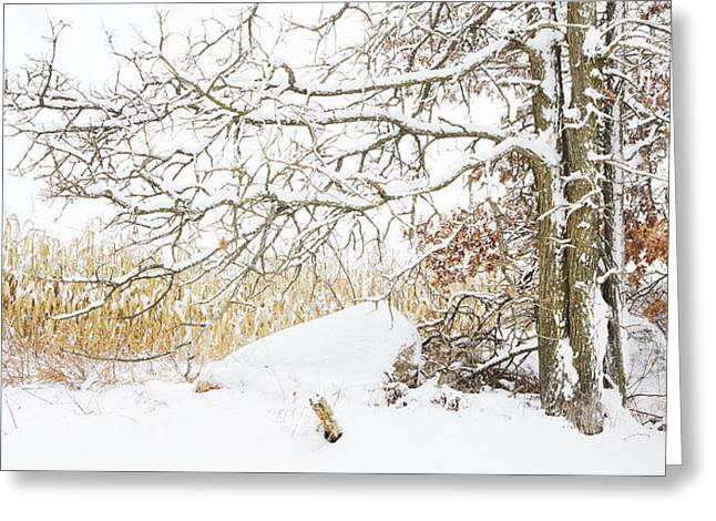 After The Snow Storm Greeting Card by Barbara Smith
