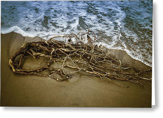 Driftwood Beach Greeting Cards - After The Storm Greeting Card by Garry Gay