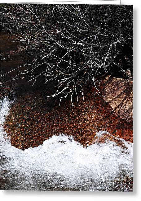 Cathedral Rock Greeting Cards - After the Thaw Greeting Card by The Forests Edge Photography - Diane Sandoval