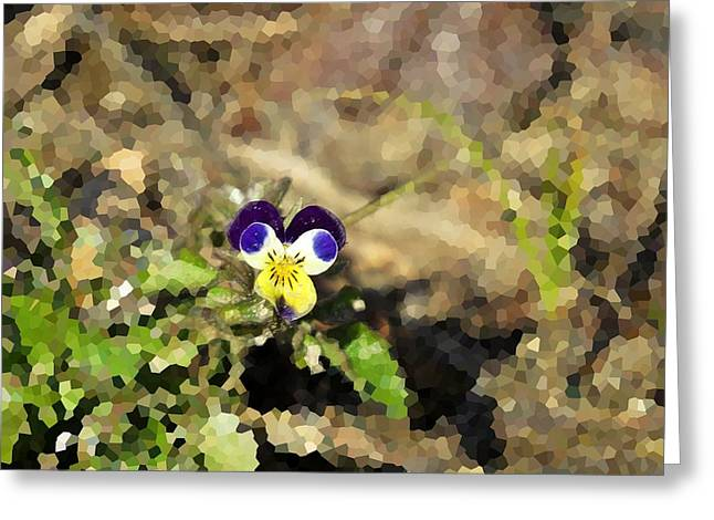 Johnny Jump Up Pansy Greeting Cards - After Winter Greeting Card by MTBobbins Photography