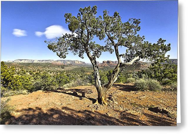 Afternoon Light In Sedona Arizona Greeting Card by James Steele