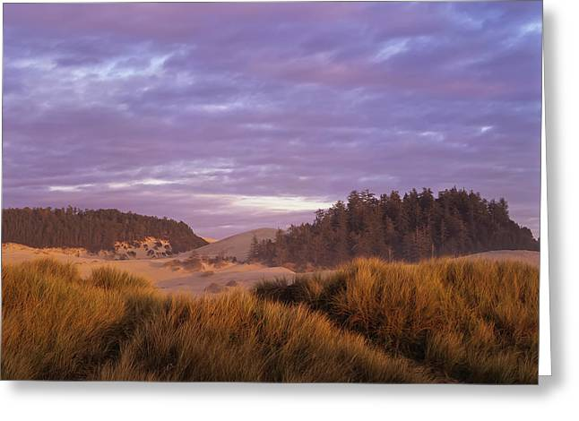 Afternoon Light Warms The Umpqua Dunes Greeting Card by Robert L. Potts
