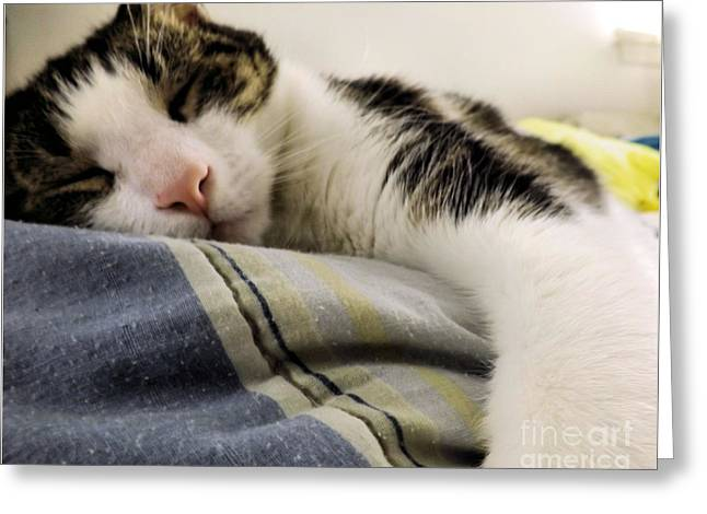 Afternoon Nap Greeting Card by Robyn King