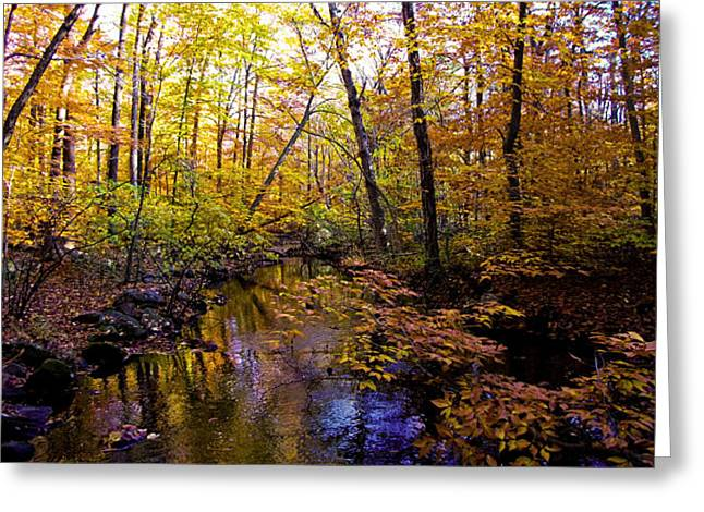 Afternoon On The Creek Greeting Card by Jo-Anna Pippen