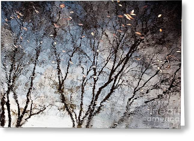 Sonoma Greeting Cards - Afternoon Reflection II Greeting Card by Derek Selander