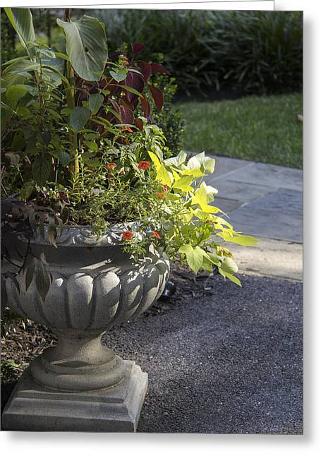 Concrete Planter Greeting Cards - Afternoon Shadow Greeting Card by Teresa Mucha