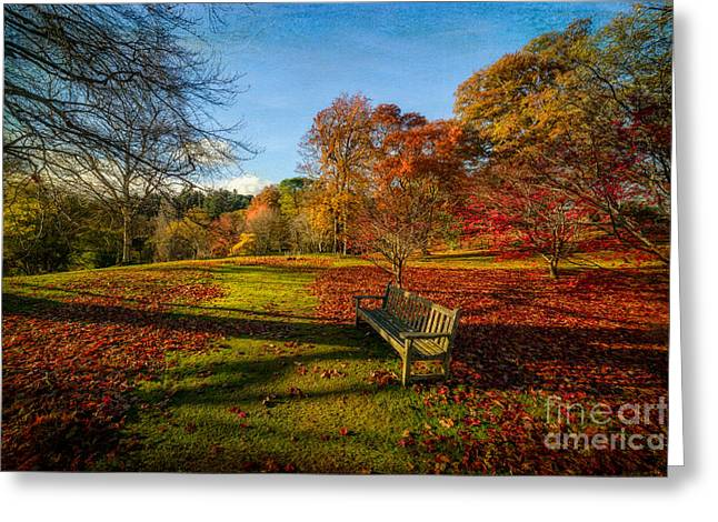 Acer Greeting Cards - Afternoon Shadows Greeting Card by Adrian Evans