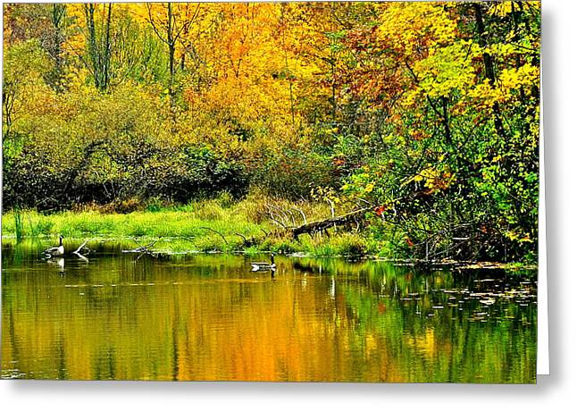 Willow Lake Greeting Cards - Afternoon Swim Greeting Card by Frozen in Time Fine Art Photography