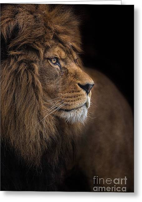 Compelling Greeting Cards - Against All Odds Greeting Card by Ashley Vincent