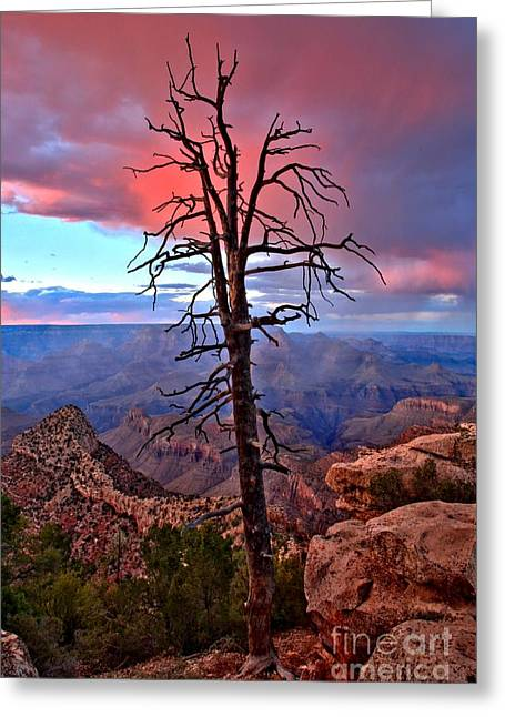 The Grand Canyon Greeting Cards - Against The Odds Greeting Card by Adam Jewell