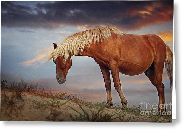Shadow Horse Studios Greeting Cards - Against the Setting Sun Greeting Card by Lyndsey Warren