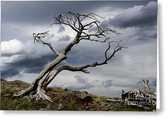 Reach Greeting Cards - Against The Wind Greeting Card by Bob Christopher