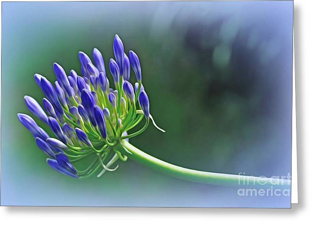 Agapantha Purple Flowers Greeting Cards - Agapantha ready to Bloom Greeting Card by Kaye Menner