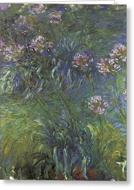 Agapanthus Greeting Cards - Agapanthus Greeting Card by Claude Monet