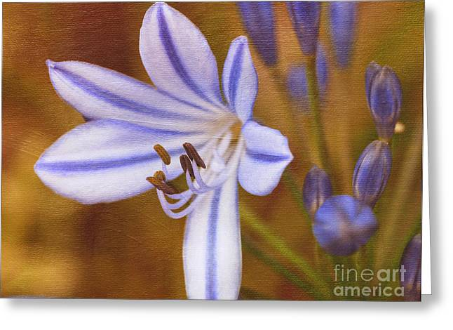 Agapanthus Greeting Cards - Agapanthus in Painting Greeting Card by Irina Wardas